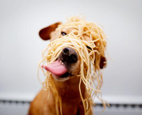 alimentos que no debe comer tu perro
